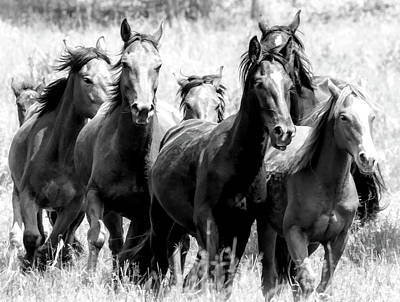 Photograph - Wild Horse Stampede Bw by Athena Mckinzie
