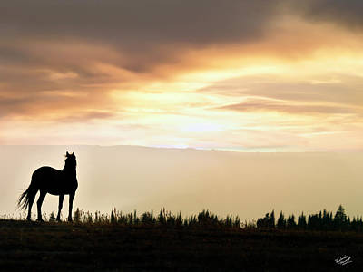 Wild Horse Sunset Art Print