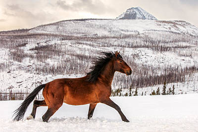 Country Snow Photograph - Wild Horse by Todd Klassy