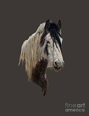 Horse Photograph - Wild Horse by Wildlife Fine Art