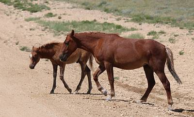 Photograph - Wild Horse With Colt  by Christy Pooschke