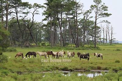 Photograph - Wild Horses 0080 by Captain Debbie Ritter