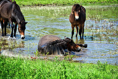 Wild Horses 3 Art Print