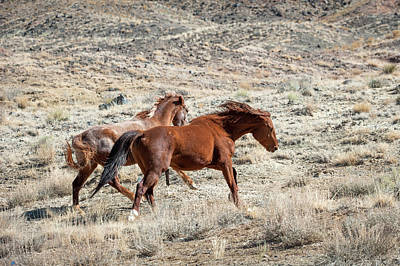 Photograph - Wild Horses #4 by Catherine Lau