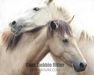 Photograph - Wild Horses 8946 by Captain Debbie Ritter