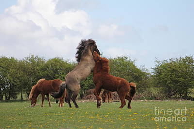 Photograph - Wild Horses 9 by Four Hands Art