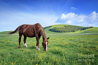 Photograph - Wild Horses by Arnaldo Tarsetti