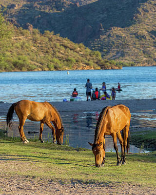 Photograph - Wild Horses At Arizona River Recreation Site by Susan Schmitz