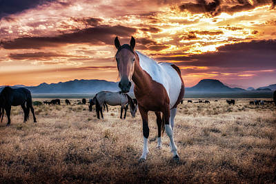 Photograph - Wild Horses At Sunset by Michael Ash