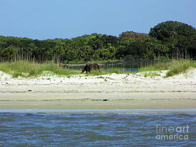 Photograph - Wild Horses At The Beach by D Hackett