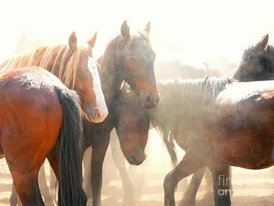 Wild Horses - Australian Brumbies 2 Art Print by Lexa Harpell