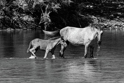 Photograph - Wild Horses Black And White by Douglas Killourie
