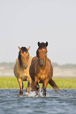 Art Print featuring the photograph Wild Horses by Bob Decker