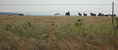 Wall Art - Photograph - Wild Horses by Brandy Herren
