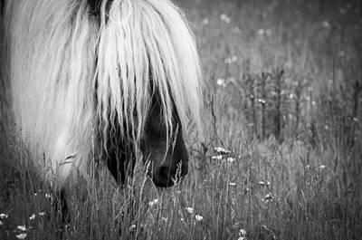 Photograph - Wild Horses-bw by Joye Ardyn Durham