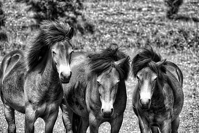 Photograph - Wild Horses Bw1 by Ingrid Dendievel