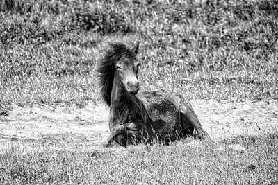 Photograph - Wild Horses Bw3 by Ingrid Dendievel