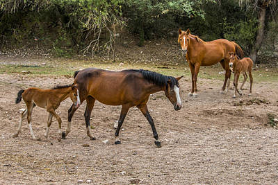 Wildlife Photograph - Wild Horses By The Lake by Chuck Brown
