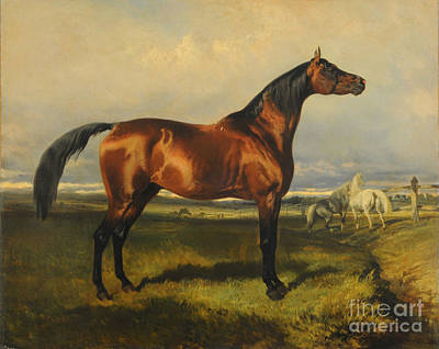 Wild Horse Painting - Wild Horses by Celestial Images