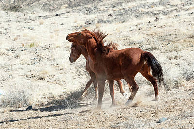 Photograph - Wild Horses Couple #3 by Catherine Lau