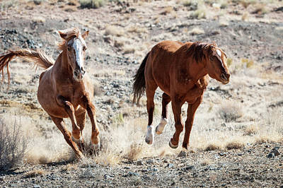 Photograph - Wild Horses Couple #5 by Catherine Lau