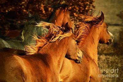 Photograph - Wild Horses by Dimitar Hristov