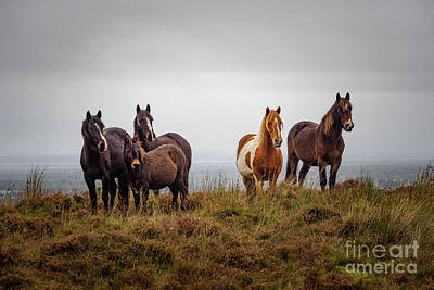 Photograph - Wild Horses In Ireland by Juergen Klust