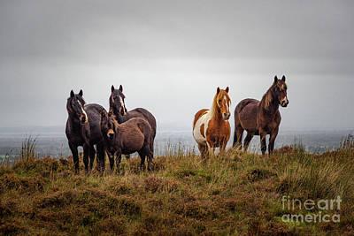 Photograph - Wild Horses In Ireland by Juergen Klust