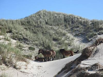 Photograph - Wild Horses In The Noordhollandse Duinreservaat by Chani Demuijlder