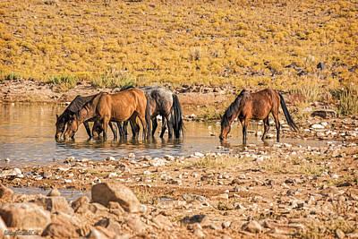 Photograph - Wild Horses In Water by LeeAnn McLaneGoetz McLaneGoetzStudioLLCcom