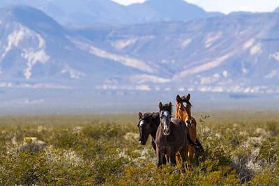 Amargosa Photograph - Wild Horses by James Marvin Phelps
