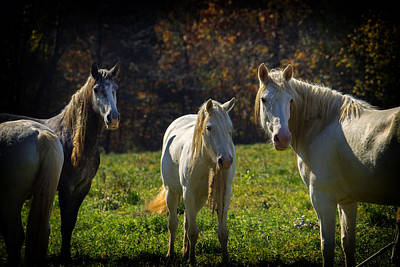 Photograph - Wild Horses Missouri Ozarks Dsc09326 by Greg Kluempers