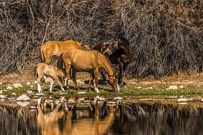 Wildlife Photograph - Wild Horses Of Arizona by Chuck Brown