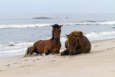 Wild Horses Of Assateague Island Art Print by Edward Kreis