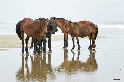 Photograph - Wild Horses Of Corolla by Fran Gallogly