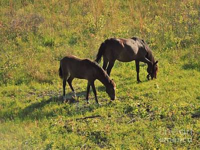 Photograph - Wild Horses Of Florida by D Hackett