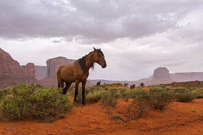Animals Photos - Wild Horses of Monument Valley by Brad Scott
