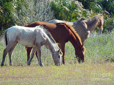 Photograph - Wild Horses Of Paynes Prairie by D Hackett