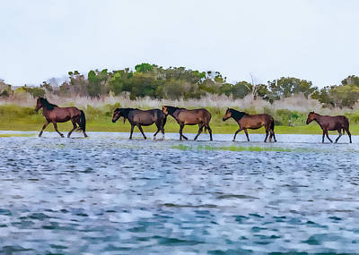 Photograph - Wild Horses Of Shackleford 1 by Erwin Spinner