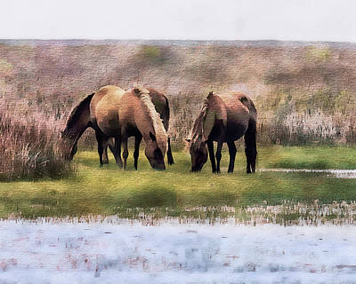 Photograph - Wild Horses Of Shackleford 2 by Erwin Spinner