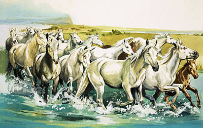 Of Horses Painting - Wild Horses Of The Camargue by English School
