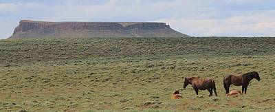 Photograph - Wild Horses On Pilot Butte  by Christy Pooschke