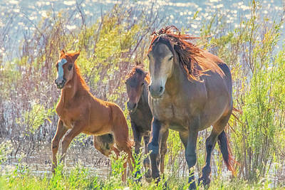 Photograph - Wild Horses On The Move by Marc Crumpler