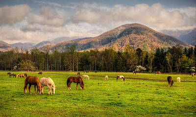 Photograph - Wild Horses by Rebecca Hiatt