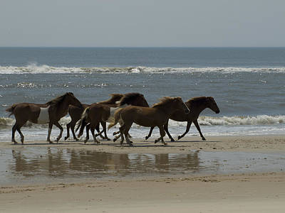 Maryland Horses Photograph - Wild  Horses Run On The Beach by Stacy Gold