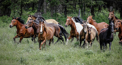 Photograph - Wild Horses Running Free by Athena Mckinzie