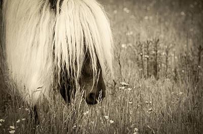 Photograph - Wild Horses-sepia by Joye Ardyn Durham