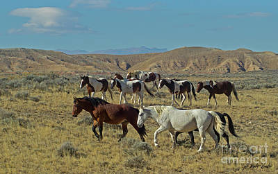 Photograph - Wild Horses-signed-#2803 by J L Woody Wooden