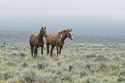 Photograph - Wild Horses - Steens 1 Rw by Belinda Greb