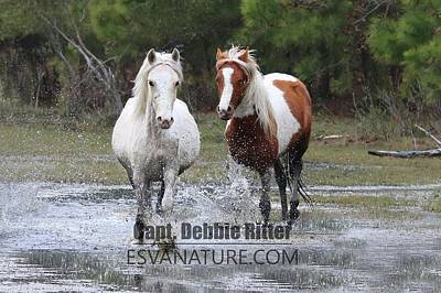 Photograph - Wild Horses Water 2030 by Captain Debbie Ritter